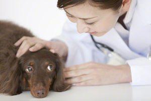 ペット向け再生医療 アトピー性皮膚炎や椎間板ヘルニア、肝硬変の臨床試験を計画